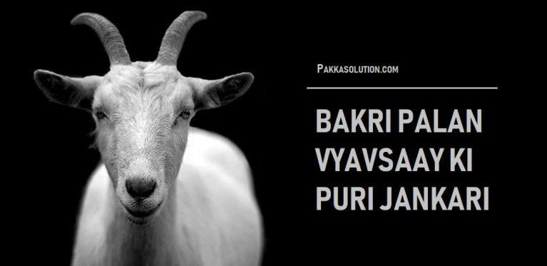 बकरी पालन का व्यवसाय (लोन से शुरू करे और लाखो कमाये)