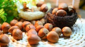हेजलनट्स के फायदे और नुकसान Hazelnuts In Hindi