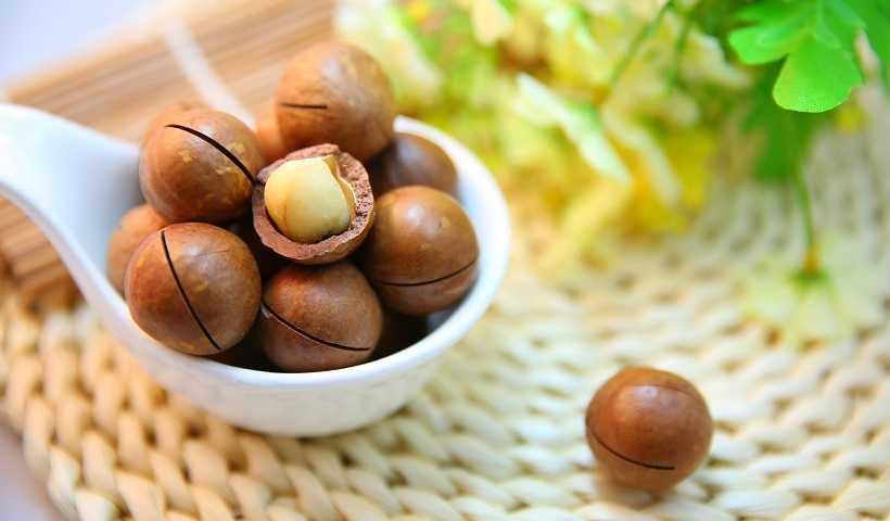 मैकाडामिया नट्स के फायदे Macadamia Nuts In Hindi