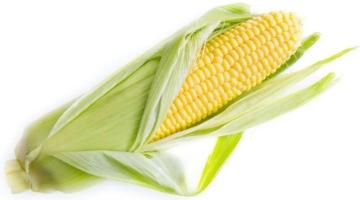 मक्का खाने के फायदे और नुकसान Corn In Hindi