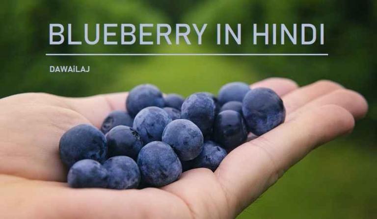 ब्लूबेरी क्या है, फायदे और नुकसान Blueberry In Hindi