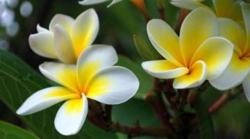 शिव पूजा में केतकी का फूल (Ketki Ka Phool) क्यों वर्जित है